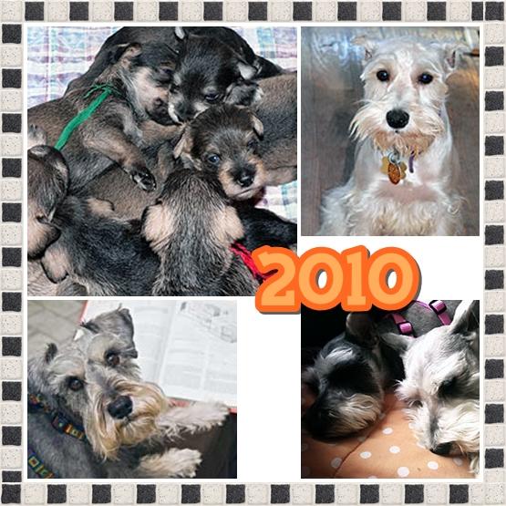 Rescue Diary: Summary of 2010