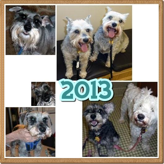 Rescue Diary: Summary of 2013
