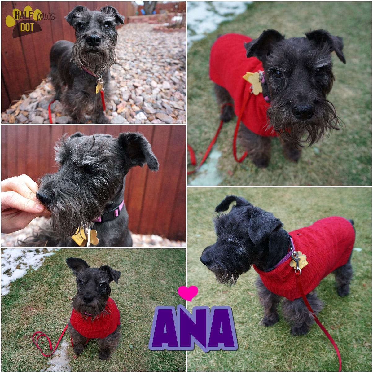Adopt Ana: an adventuresome lady