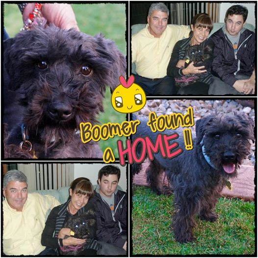 Boomer was adopted!