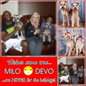 Milo and Devo Adopted