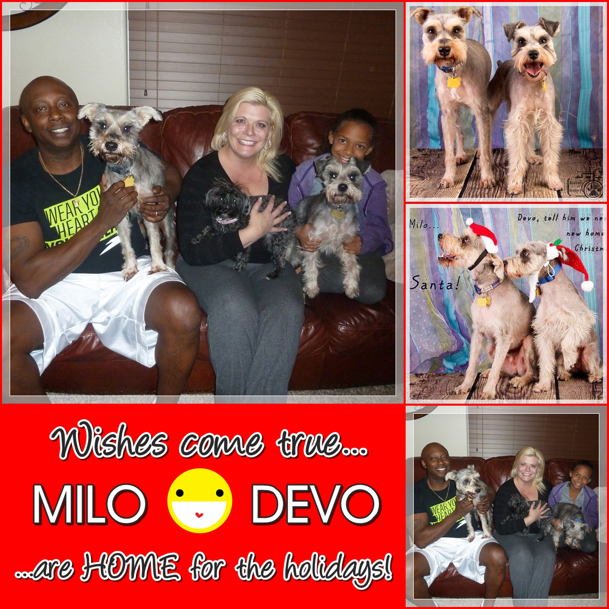 Milo and Devo were adopted!