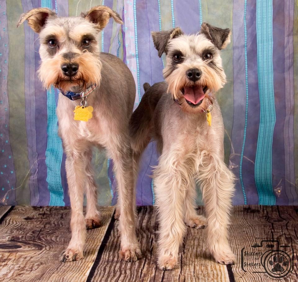 Adopt Milo and Devo: double the snuggles!