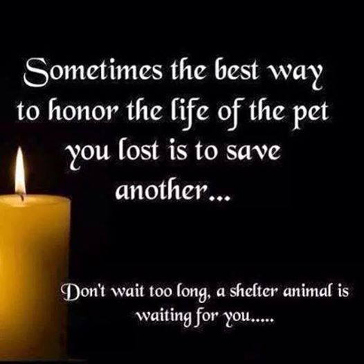 Save a life by adopting a new pet