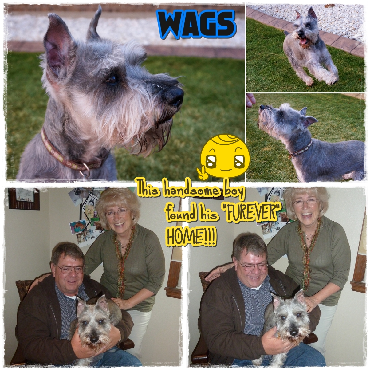 Wags was adopted!