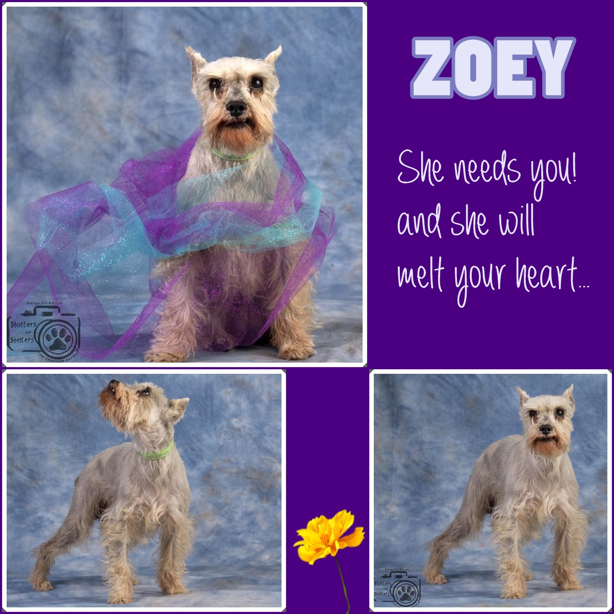 Adopt Zoey: an affectionate, active little girl