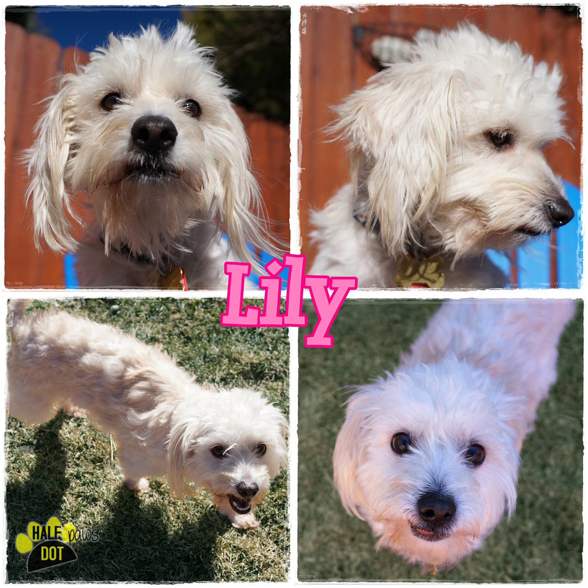 Adopt Lily: sweet as sugar!