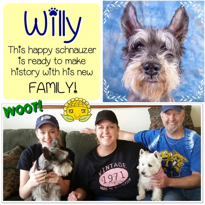 Willy (Schnauzer) adopted