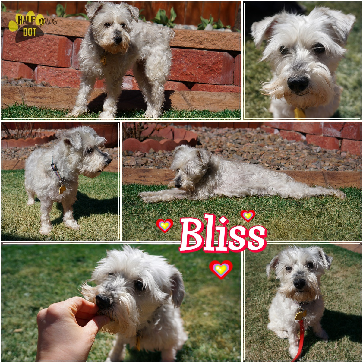 Adopt Bliss: A young, playful lover