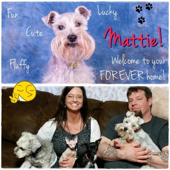Matttie (Schnauzer adopted!)