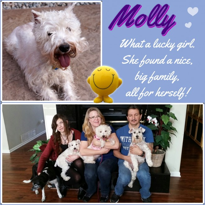 Molly (White Schnauzer) Adopted