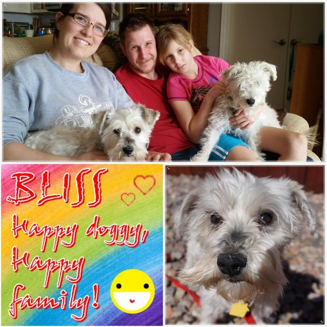 Bliss Adopted Schnauzer