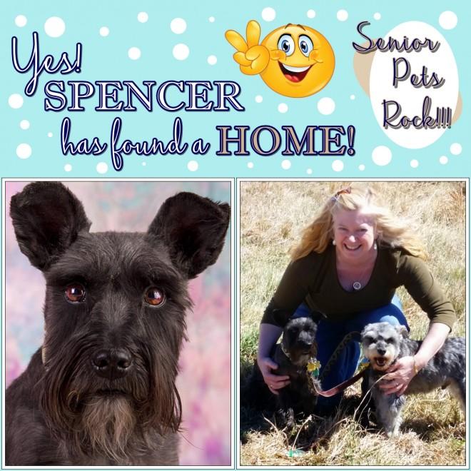 Spencer (Schnauzer Adopted)