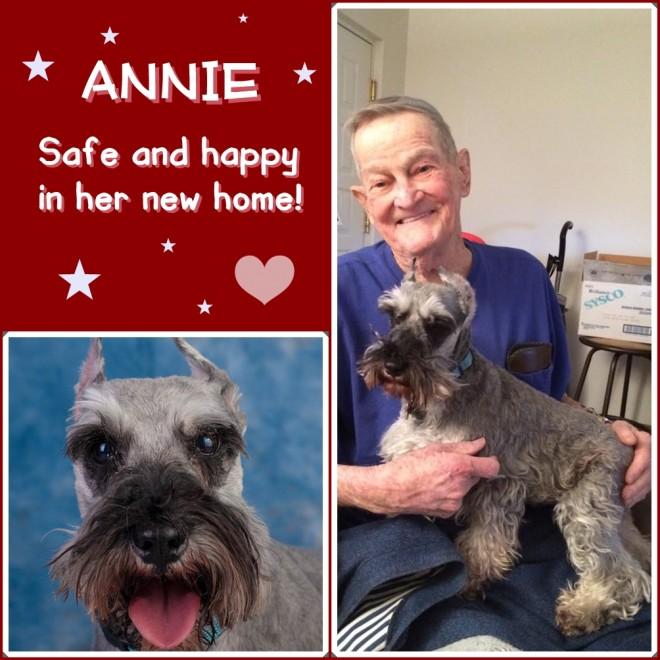 Annie (Mini Schnauzer) adopted