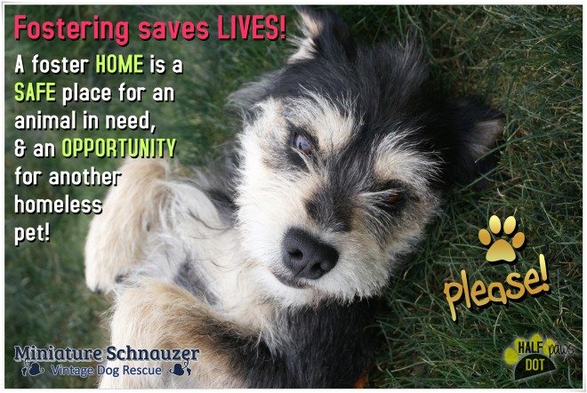 Our rescue doggies need foster families!