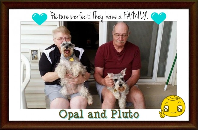Opal & Pluto (Schnauzers Adopted)