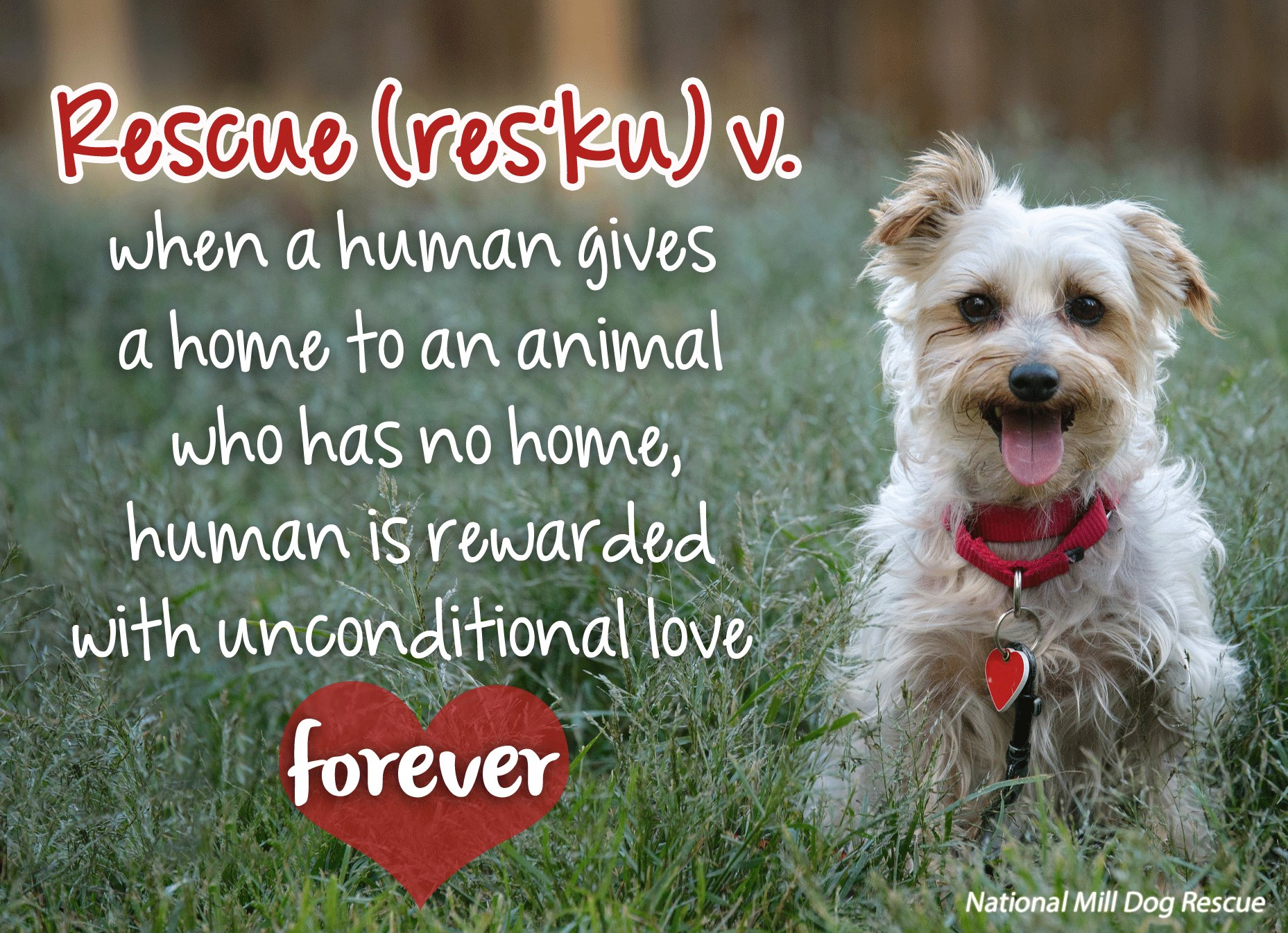 Unconditional love… forever!