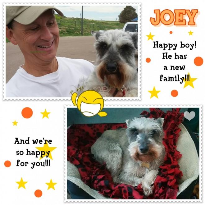 Joey (Adopted Mini Schnauzer)