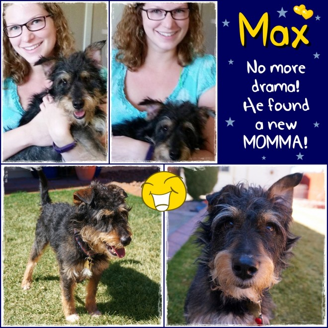 Max (Adopted Terrier Mix)