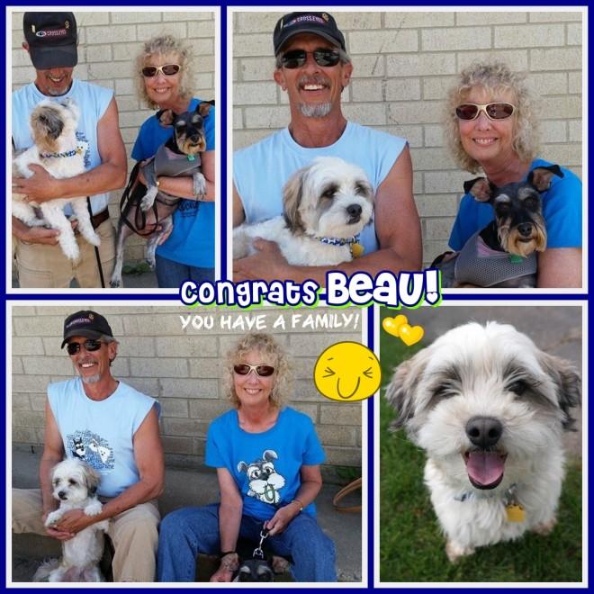 Beau adopted