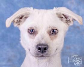 Dixon (Puppy for adoption)