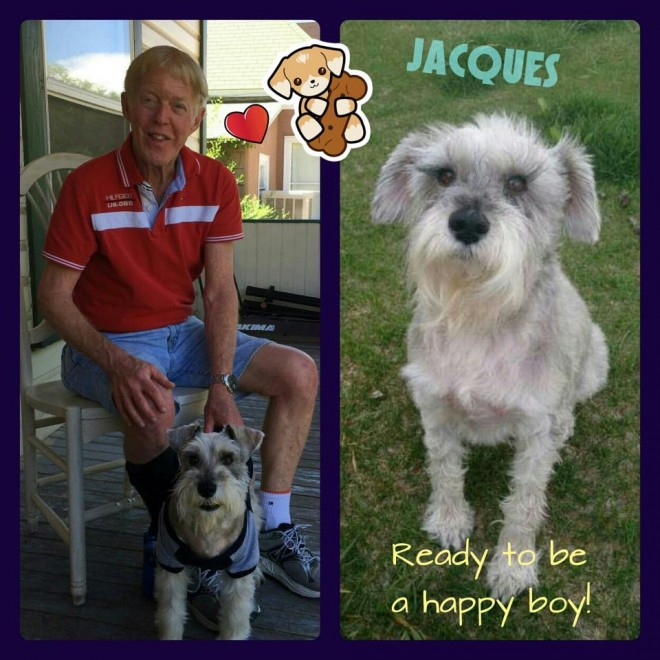 Jacques (Mini Schnauzer Adopted)
