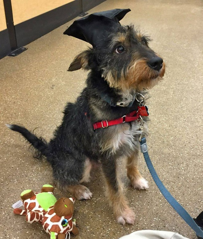 Max (Adopted Terrier) photo update