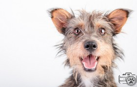 Zoey (Terrier Mix) for Adoption