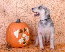 Fritz (Schnauzer) for adoption