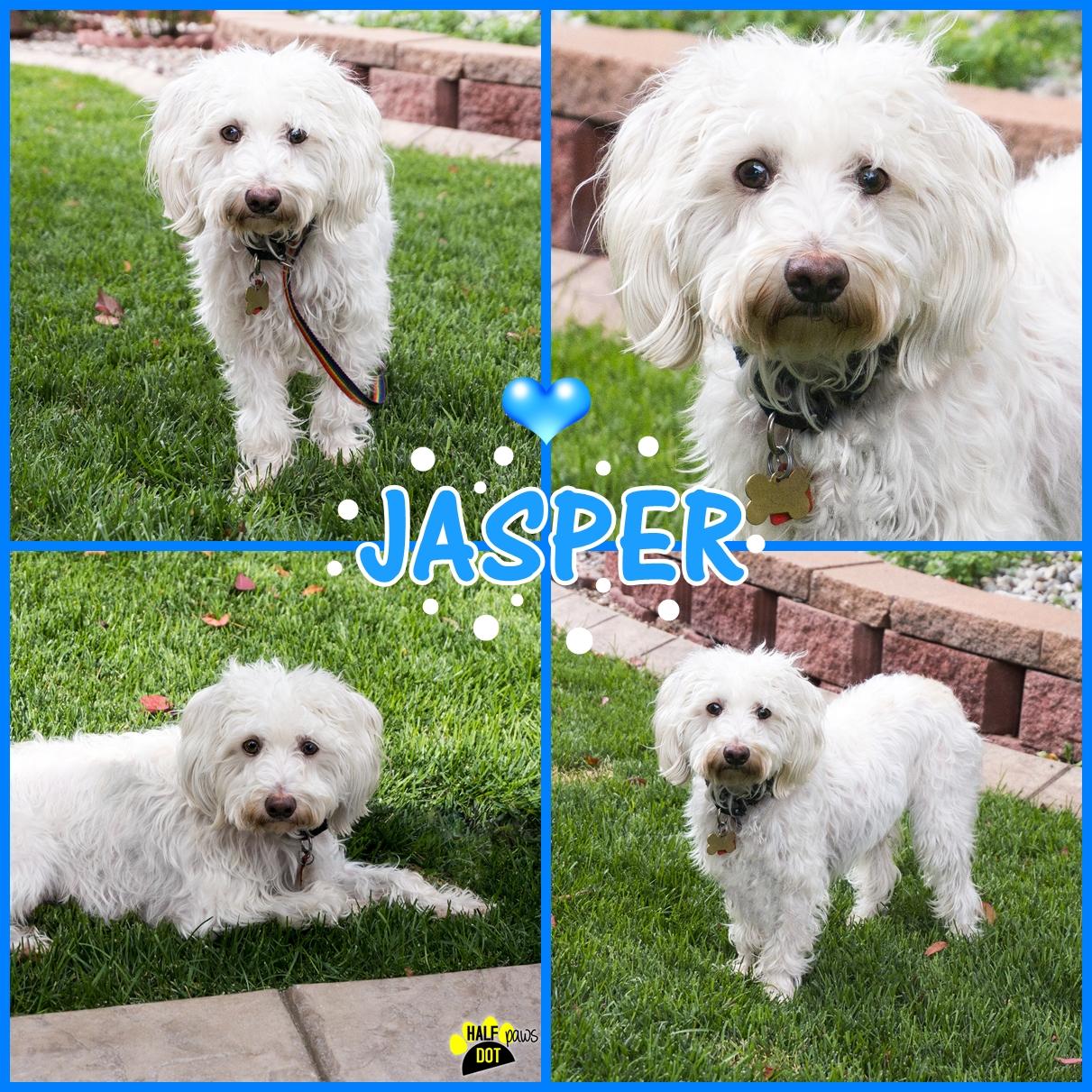 Adopt Jasper: a shy sweetheart