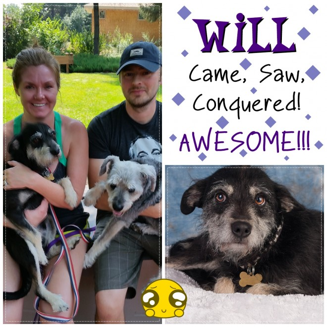 Will (Terrier Mix) Adopted
