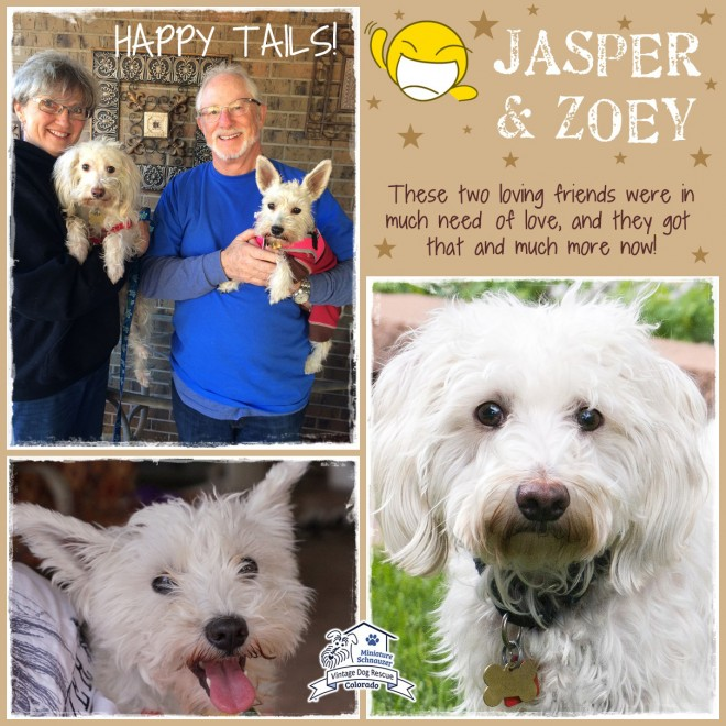 Jasper & Zoey (Terrier Mix Dogs) Adopted