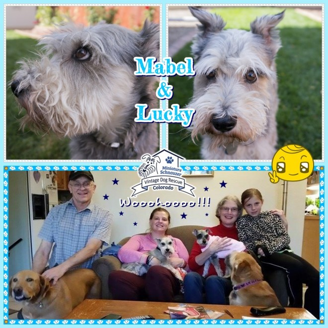 Lucky & Mabel (Mini Schnauzers adopted)