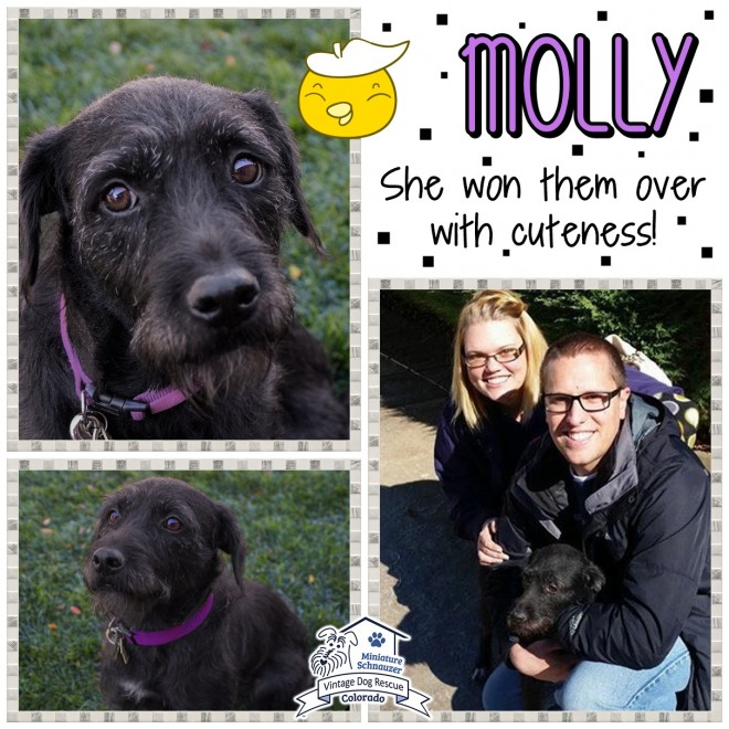 Molly (Terrier Mix) Adopted