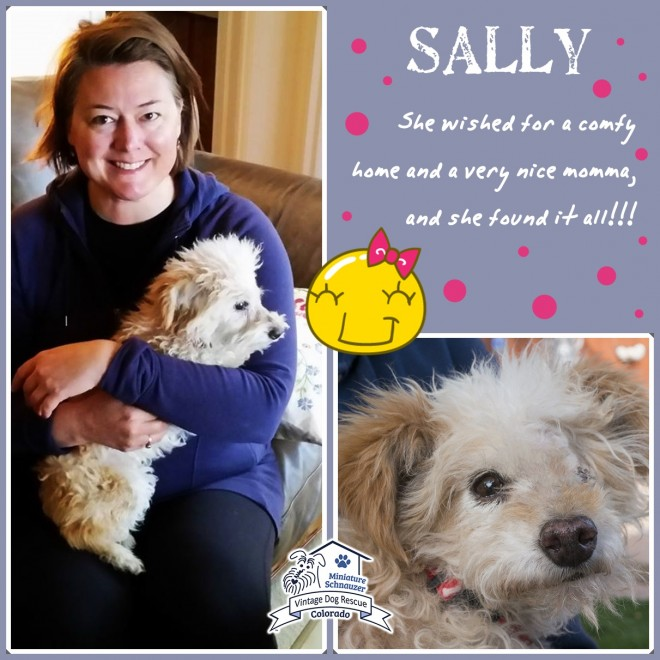 Sally (Terrier Mix) Adopted
