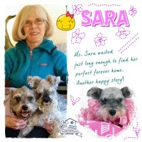 Sara (Mini Schnauzer adopted)