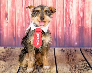Max (Terrier Mix for Adoption)