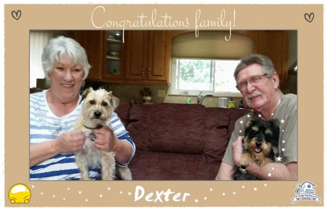 Dexter (Terrier Mix) adopted