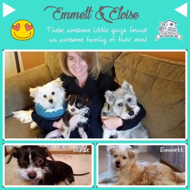 Emmett & Eloise (Adopted Terrier Mix Dogs)