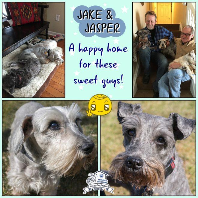 Jake & Jasper (Mini Schnauzers adopted)