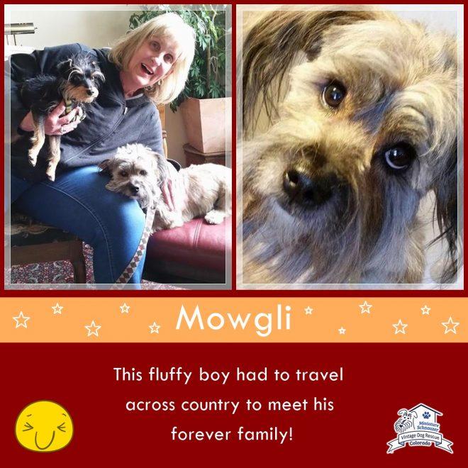 Mowgli (Terrier Mix) Adopted