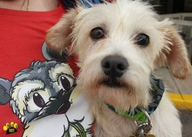 Marty (Terrier mix for adoption)