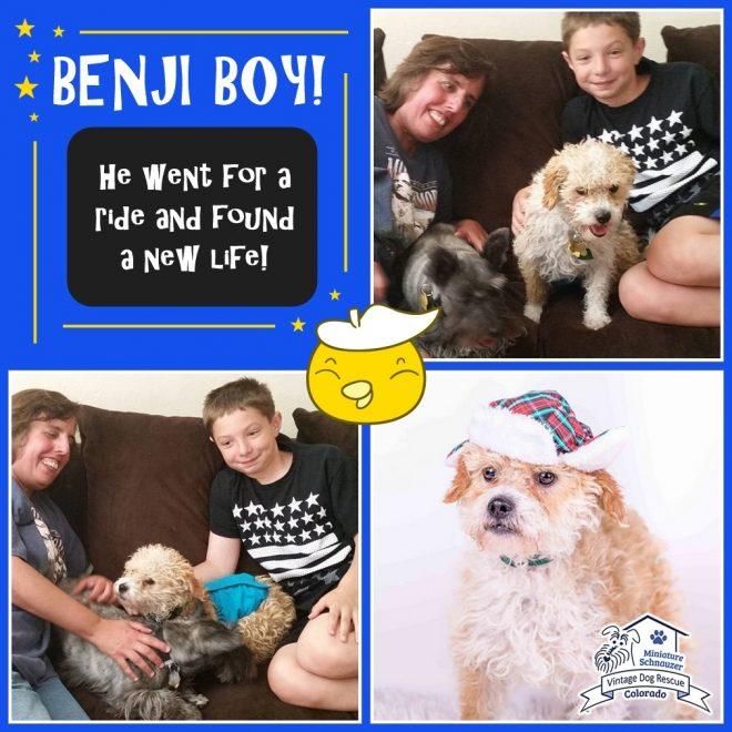 Benji (Terrier Mix) adopted