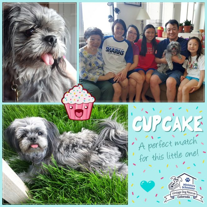 Cupcake (Shih Tzu Mix adopted)