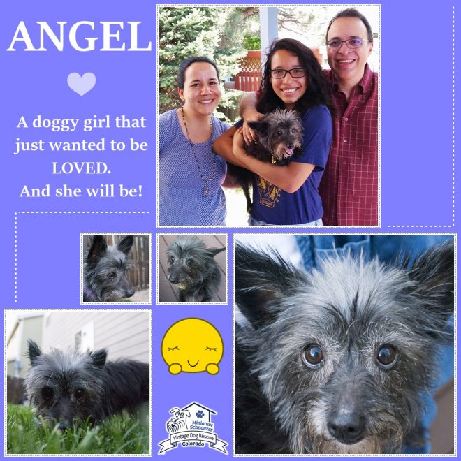 Angel (Terrier Mix) Adopted