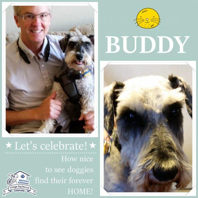 Buddy (Mini Schnauzer) adopted
