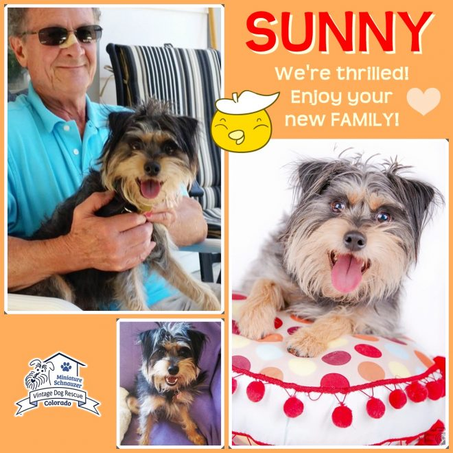 Sunny (Terrier Mix) Adopted