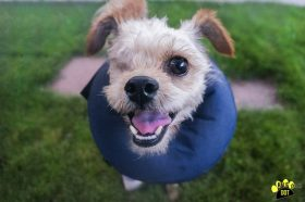 Hoover (Terrier mix for adoption)