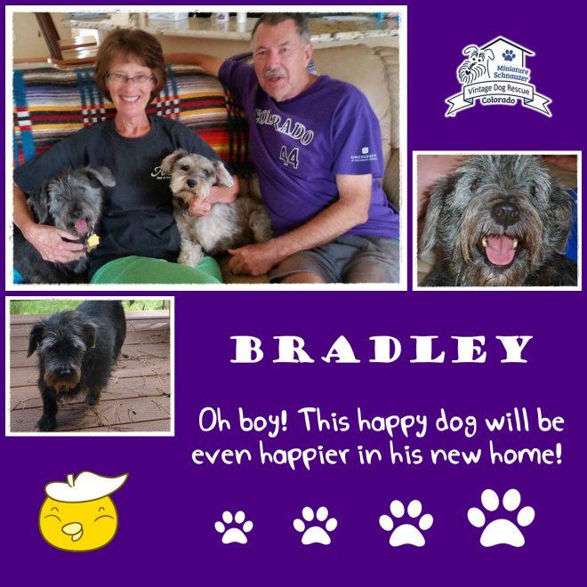 Bradley (Mini Schnauzer mix) adopted