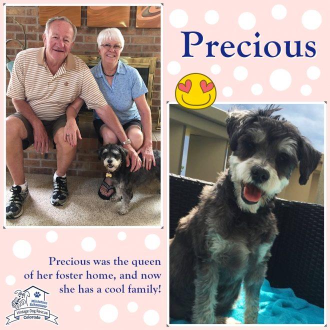 Precious (Mini Schnauzer) adopted